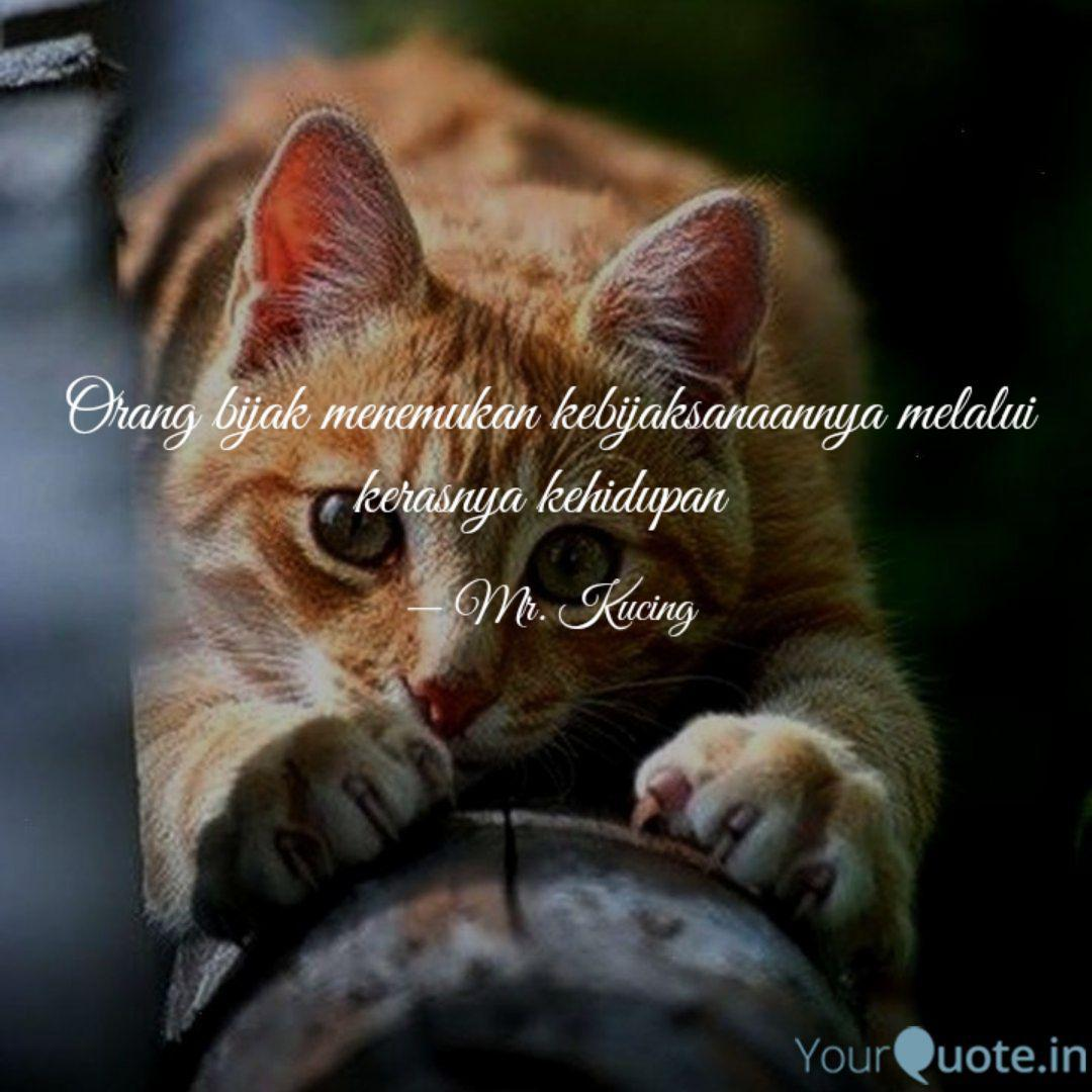 mr kucing quotes yourquote