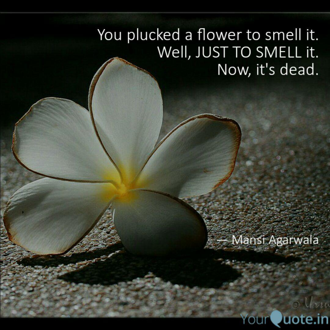 you plucked a flower to s quotes writings by mansi agarwala