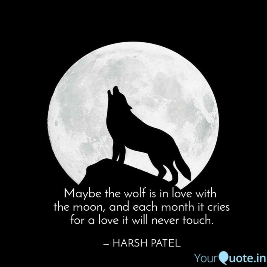 Maybe the wolf is in love  Quotes & Writings by Harsh Patel