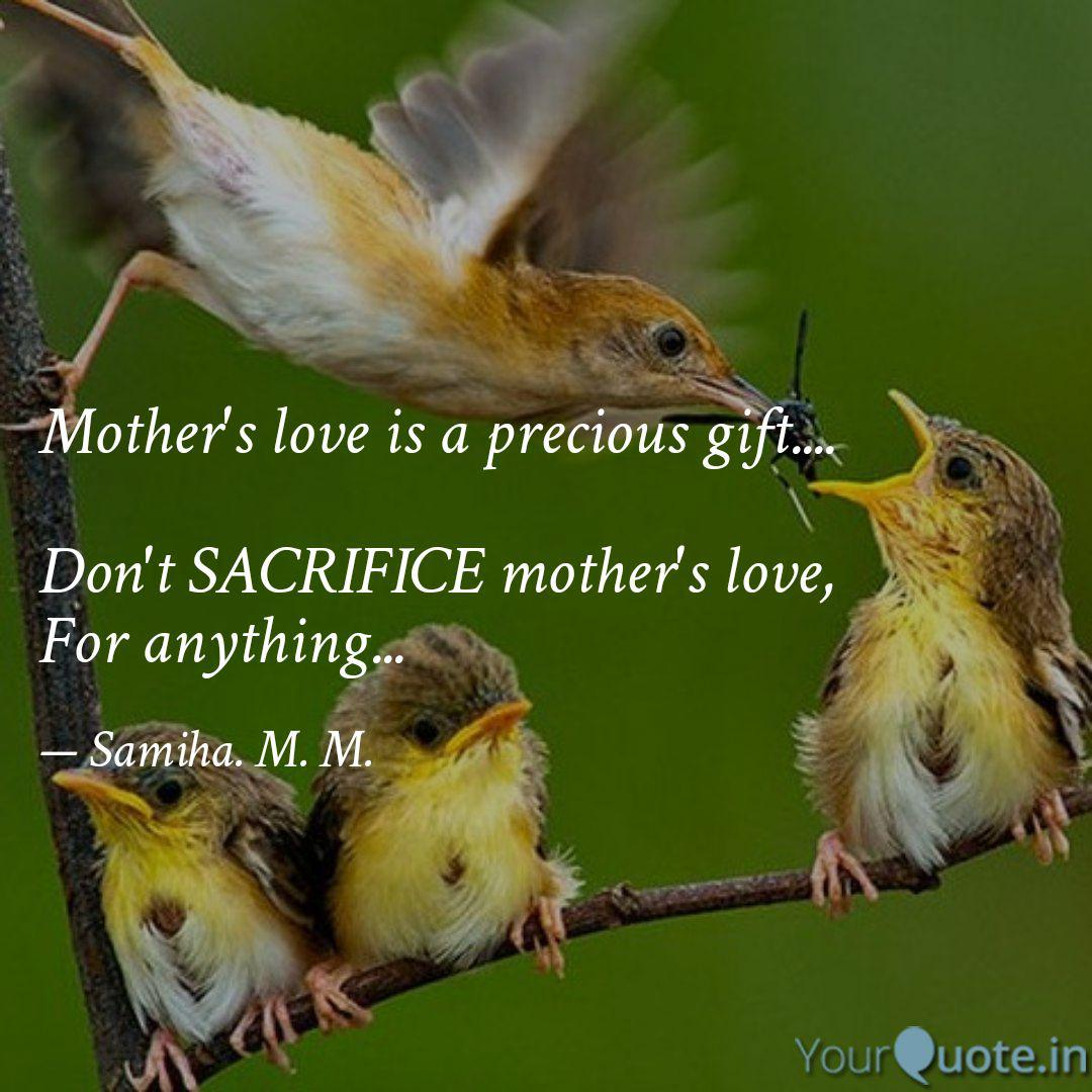 Mother S Love Is A Precio Quotes Writings By Shameen Banu Yourquote