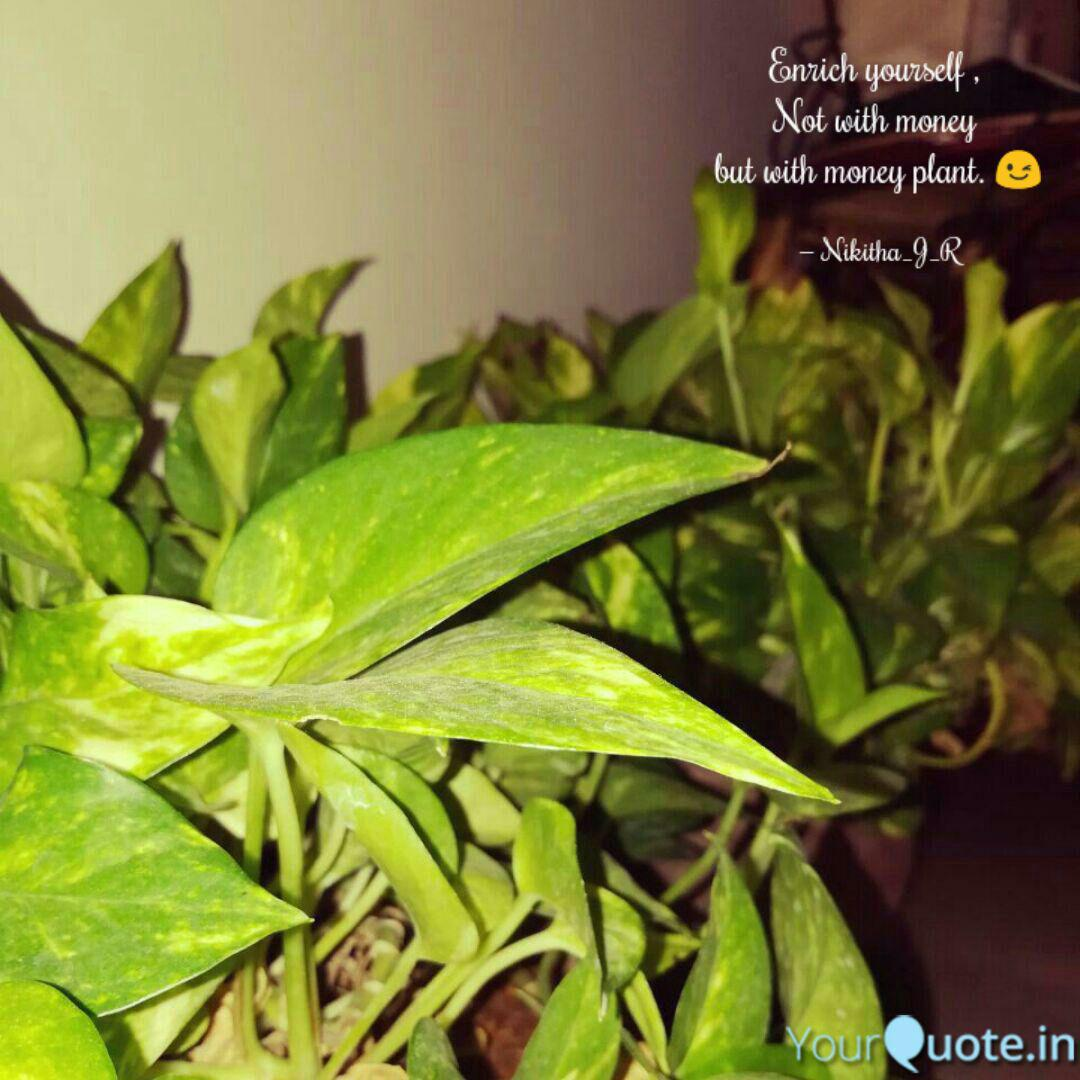 Best Moneyplant Quotes Status Shayari Poetry Thoughts Yourquote
