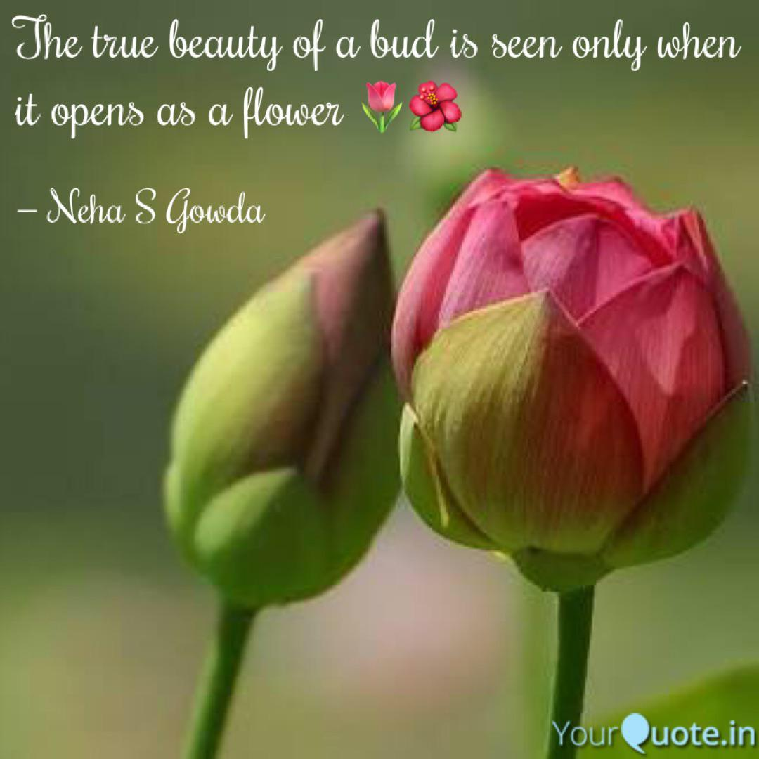 the true beauty of a bud quotes writings by neha s gowda